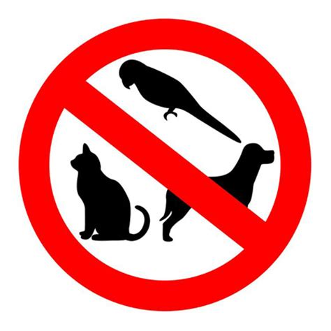 Owning a Pet Essay - 123helpmecom